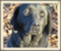Doggie Daycare in Richmond Virginia