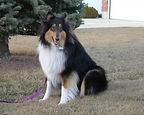 Dog Fencing in Richmond Virginia