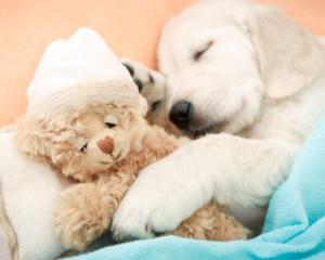 A Dog's Bedtime Prayer