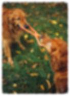 Dog Daycare in Montpelier Virginia