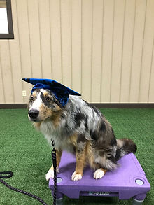 Pippi Dog Training in Hanover County