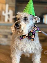 My Birthday Party at the PawsCienda in Richmon VA