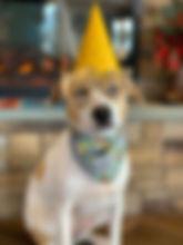 My Birthday Party at PawsCienda Pet Resort in Montpelier Virginia