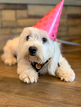Birthday Party Day at the PawsCienda in Monpelie Virginia