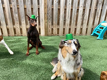 St. Patrick's Day PawsCienda Pet Resort