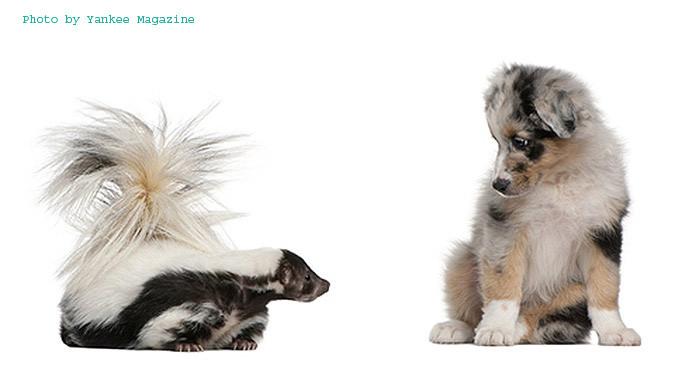 skiunk-dog copy.jpg