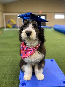 Gracie Dog Training in Richmond Virginia