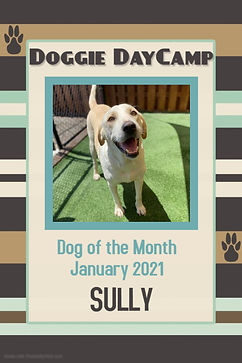 January 2021 Dog of the Month - Sully.jp