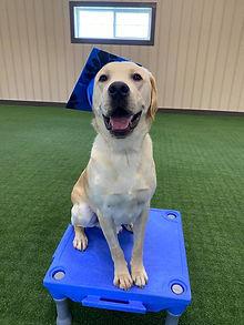 Cody Dog Training in Richmond Virginia