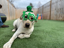Doggie DayCamp PawsCienda Pet Resort Glen Allen