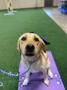 Sammie Dog Training in Central Virginia