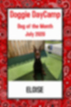 Doggie DayCamp dog of the month - July 2