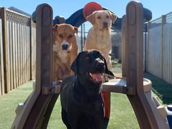 PawsCienda's Doggie Day Camp