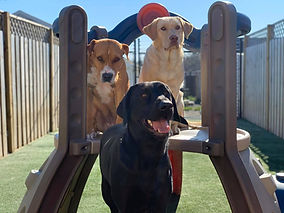 The Gang at PawsCienda's Doggie DayCamp in Montpelier Virginia