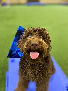 Rosie Dog Training in Richmond Virginia
