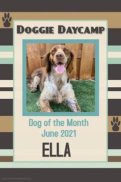 Dog of the Month-June 2021 - Ella.jpg