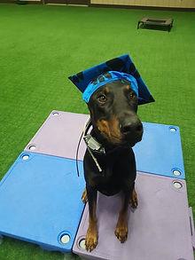 Roman Dog Training in Virginia