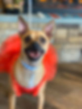Annie Brown's Birthday at the PawsCienda Pet Resort