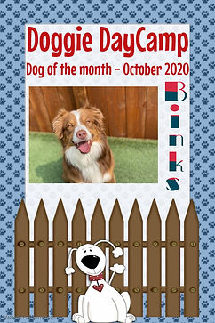Doggie DayCamp dog of the month - Octobe