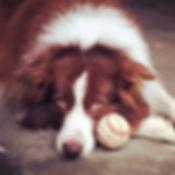 Dog Daycare in Richmond Virginia
