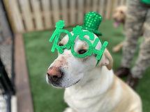 Lucky of the Irish PawsCienda Pet Resort Virginia