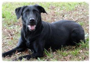Pet Training in Richmond Virginia