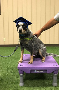 Boone Dog Trainers in Virginia