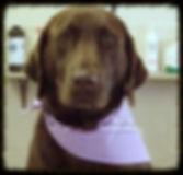 Dog Grooming in Montpelier Virginia