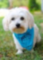 Verus Dog at PawsCienda's dog boarding and dog training ranch