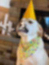 Party Animal at th PawsCienda Pe Resort