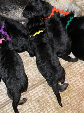 Tracy babies 06_0003.JPG