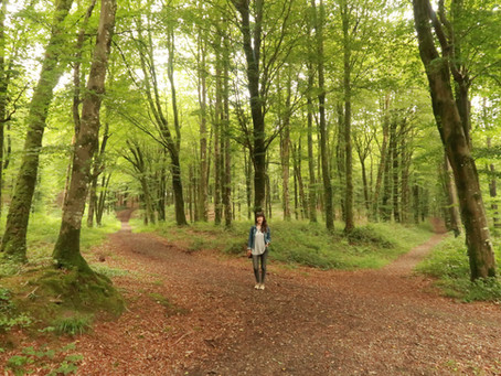 Off the beaten track: Westmeath forest walks for all the family