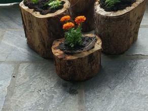 Flower pots by pine tree