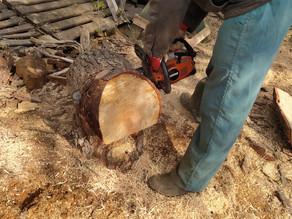 Pine tree creations