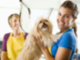Small Business - Dog Groomer