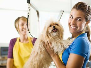 Ο γκρούμερ συμβουλεύει: Πέντε μυστικά για την περιποίηση του σκύλου στο σπίτι.