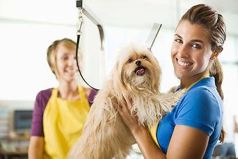 Оформим патент на стрижку домашних животных (груминг)