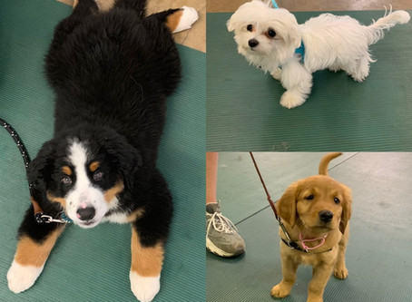 Puppy Classes Starting!