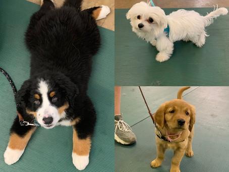 Puppy Classes Starting!