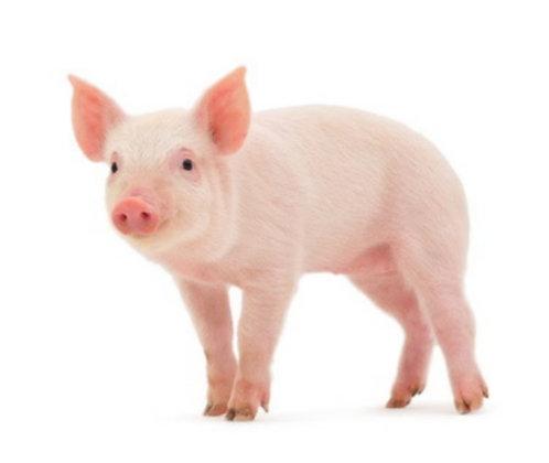 Mélange de porc env. 5 Kg (CHF. 15.00 / Kg)
