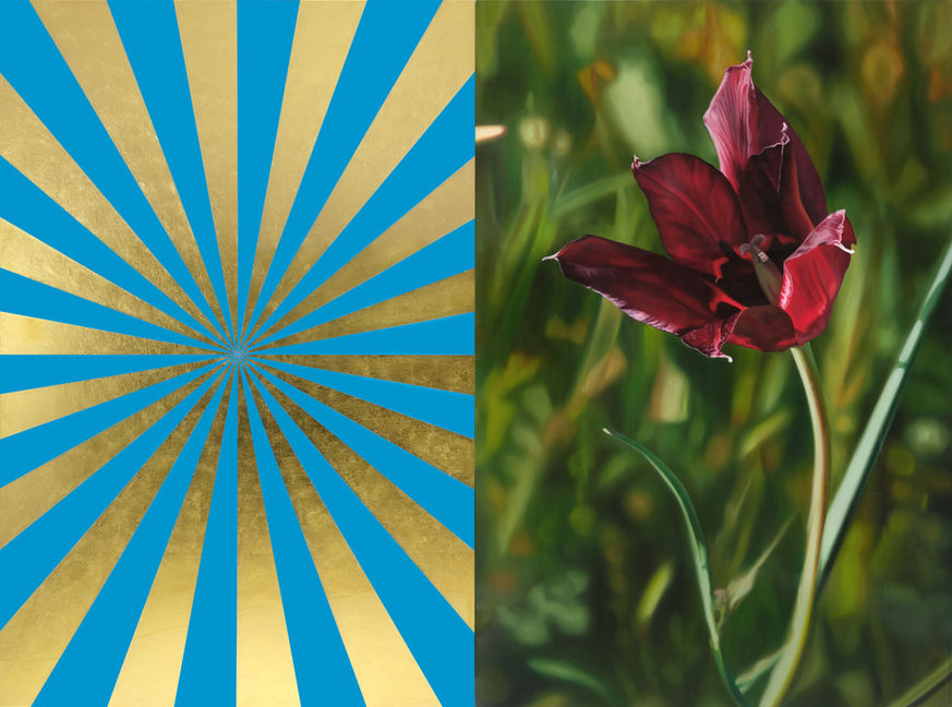 Black Tulip and Gold/Blue Expander (M), 2013