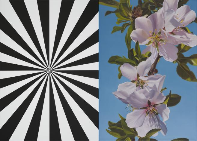 Exstacy Almond Blossom 33 (S), 2016