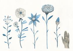 Anna Margrethe Kjærgaard - blomster