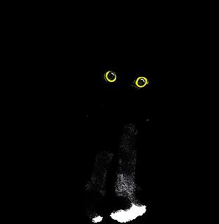 Katze.png