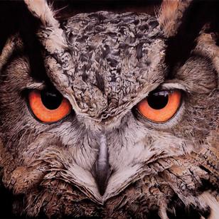 Tutorial de hiper-realismo: olho de coruja