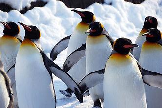 linux penguins.jpg