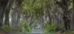 Dark_Hedges_near_Armoy%2C_Co_Antrim_(cro
