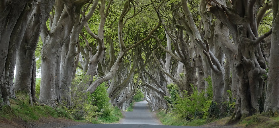 Dark_Hedges_near_Armoy%2C_Co_Antrim_(cro
