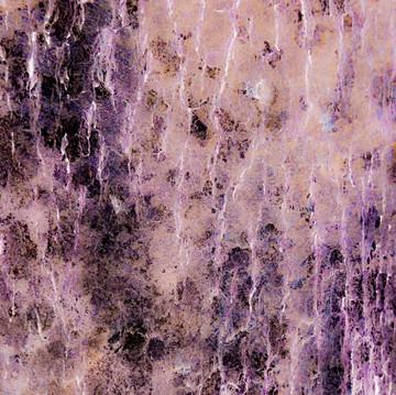 Photography#09(moss and bark)