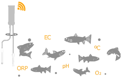 Fish+Probe Left.png